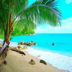 方舟之家岛屿生存