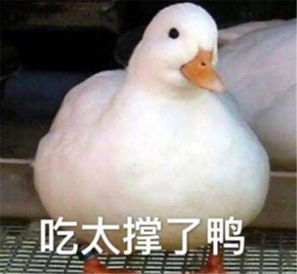 小天鹅我馋你了表情包