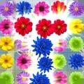 儿童花朵消消乐