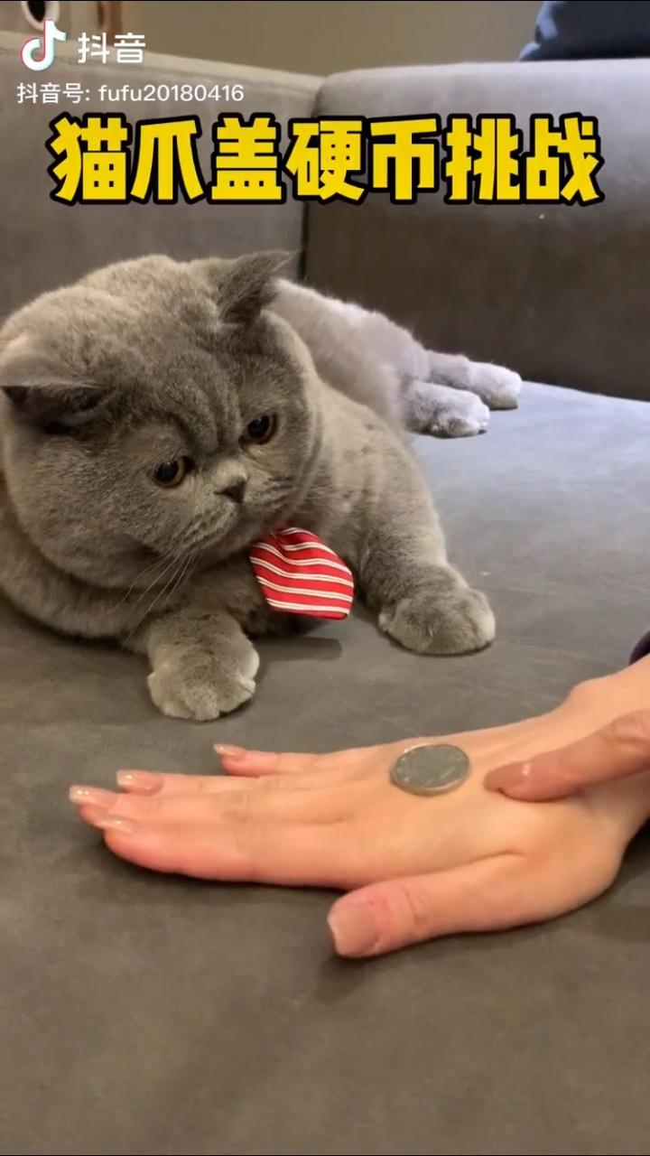 抖音猫抓硬币挑战表情包图3