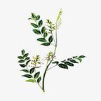 中药植物百科